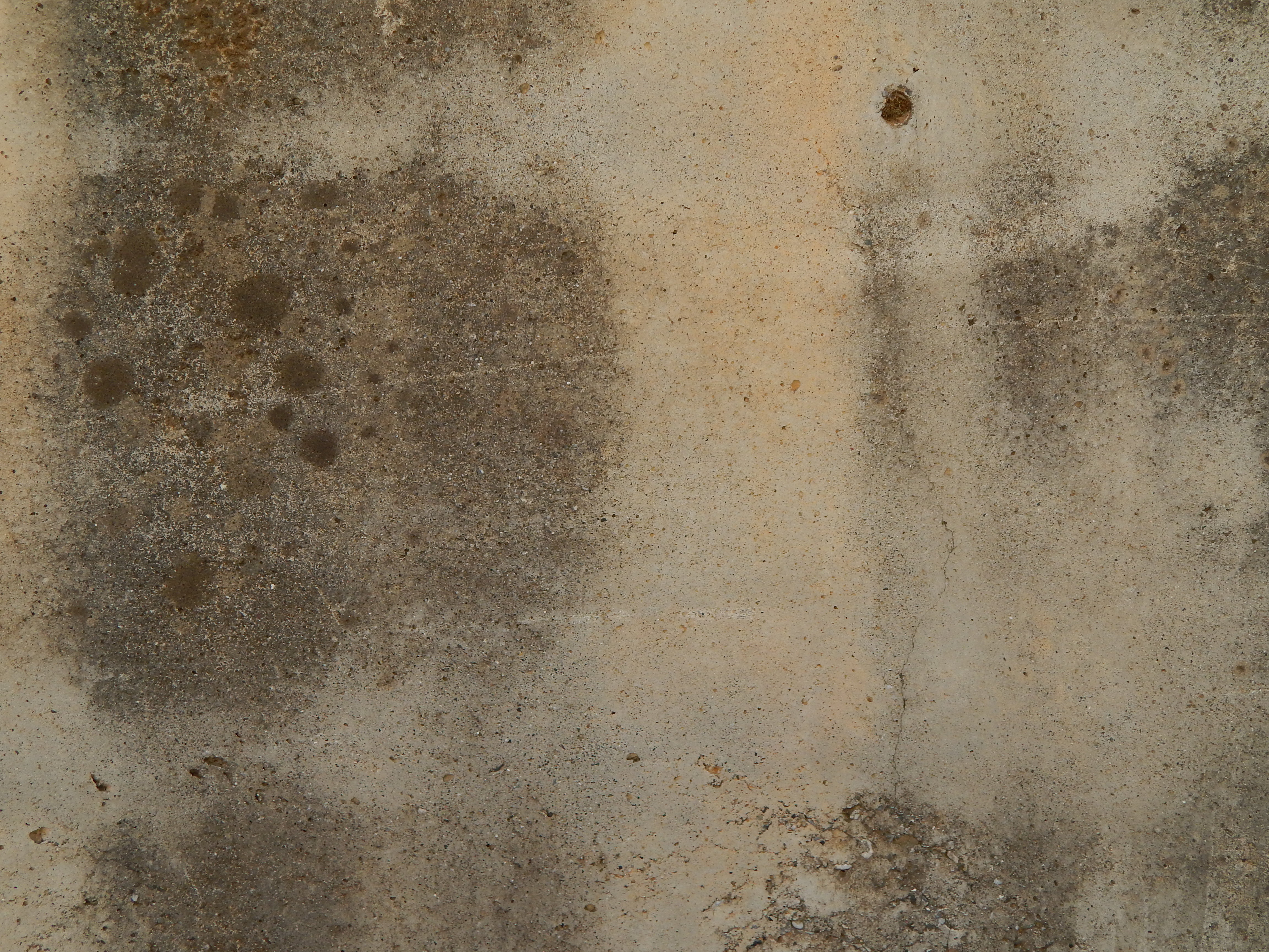 Top 5 Best Mold Removal Companies in Athens, AL
